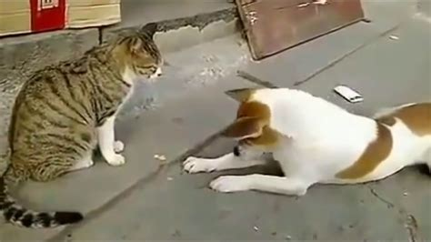 angry cats  dogs funny compilation  youtube