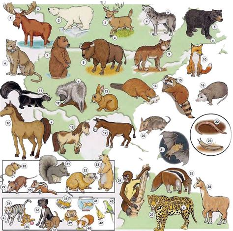 Spread across africa, the buffalo move in huge herds. Learning English grammar, vocabulary, conversation, free on-line PDF - Learning basic English ...