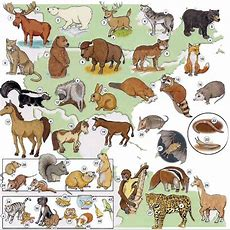 Animals And Pets Vocabulary List Pdf  Art  Vocabulary, Learn English, Picture Dictionary