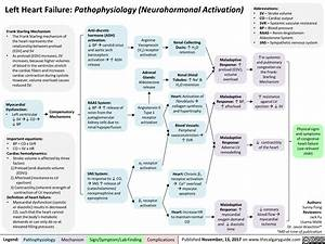 Left Heart Failure  Pathophysiology  Neurohormonal