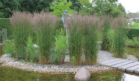 Garten Gestalten Immergrün by Graeser Special Immergr 252 Ne Gr 228 Ser Sichtschutz Sichtschutz