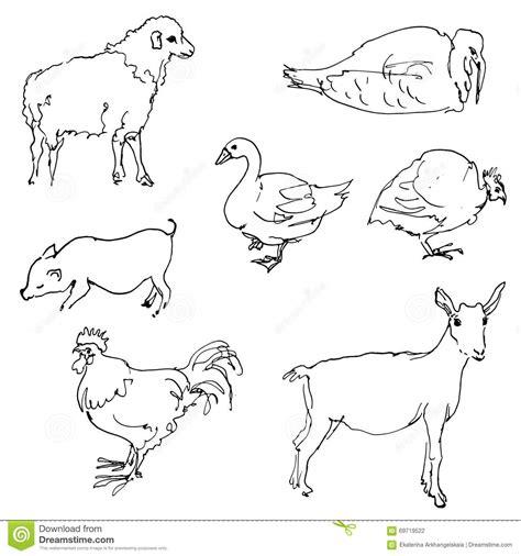 sketch  farm animals stock vector illustration