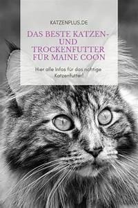 Bestes Trockenfutter Für Katzen : das beste katzen und trockenfutter f r maine coon ~ A.2002-acura-tl-radio.info Haus und Dekorationen