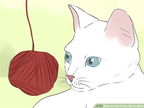 how to tell if your is blind how can u tell if a cat is going blind image of