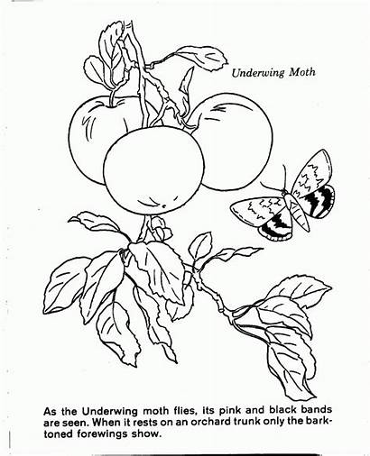 Coloring Nature Pages Scenes Scene Library Clipart