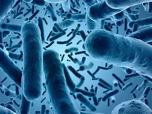 Gut Bacteria May Aid Testing For Colon Cancer