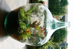 Pflanze In Flasche : flaschengarten ~ Whattoseeinmadrid.com Haus und Dekorationen