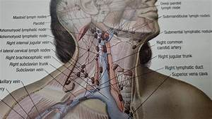 Chiropractic Adjustments And The Lymph Nodes In The Neck
