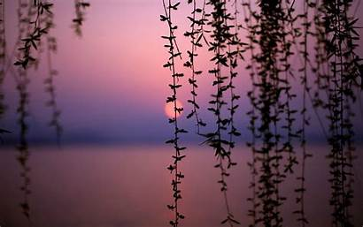 Put Wallpapers Desktop Sensual Sunset Weekly