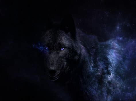 Wallpaper Black Wolf Background black wolf wallpapers images photos pictures backgrounds