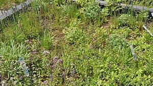 Extensive Dachbegrünung Pflanzen : pflanzen f r die dachbegr nung dachbegr nung information pflanzenshop ~ Frokenaadalensverden.com Haus und Dekorationen
