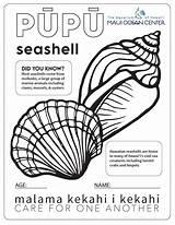 Coloring Seashells Ocean Seashell Maui Classroom Education Mauioceancenter sketch template
