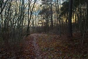 Dark, Forest, Path