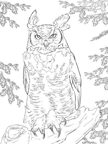 realistic great horned owl coloring page  printable coloring pages