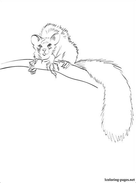 aye aye lemur coloring page coloring pages