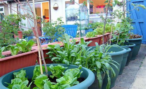 indoor container gardening fruit gardening flower and