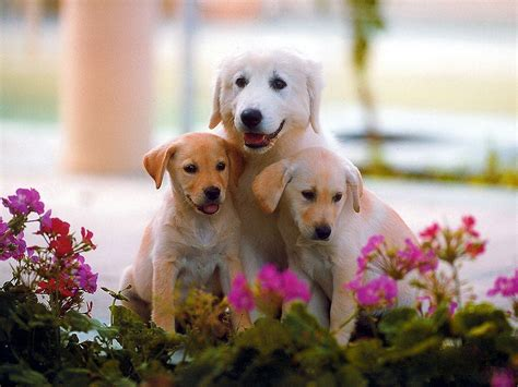 Hd Cute Dogs Wallpapers 1600x1200