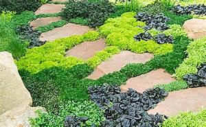Couvre Sol Vivace : 8 plantes couvre sol id ales pour petits jardins my ~ Premium-room.com Idées de Décoration