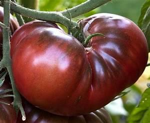 Tomato Organic Black Krim Tomato Seeds