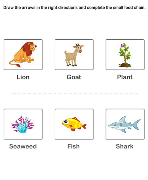 food chain worksheets free educational worksheets for