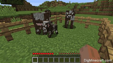 breed cows  minecraft