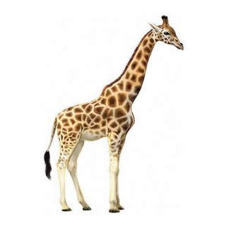 Giraffe Photo Sculptures, Cutouts And Giraffe Cut Outs. Graduation Party Ideas 2017. Large Puzzle Piece Template. Birthday Invitation Card Template. Application Form Template Word. College Transcript Template Download. Colorado State University Graduate School. Academia De Baile. Picture Of Graduated Cylinder