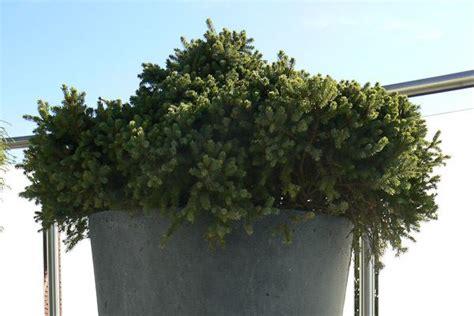Terrassengestaltung Mit Pflanzen by Terrassengestaltung B 252 Rogestaltung Mit Blumen Pflanzen