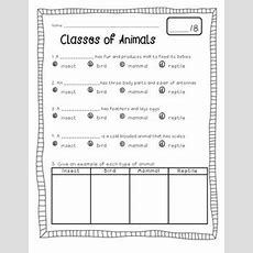 Best 25+ Classifying Animals Ideas On Pinterest  Animal Classification, Animal Classification