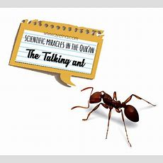 How Did The Ant Speak To Sulaiman (as)? Ayeina