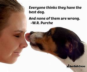 dog lovers quotes