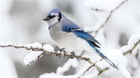 bird full hd wallpaper  background image