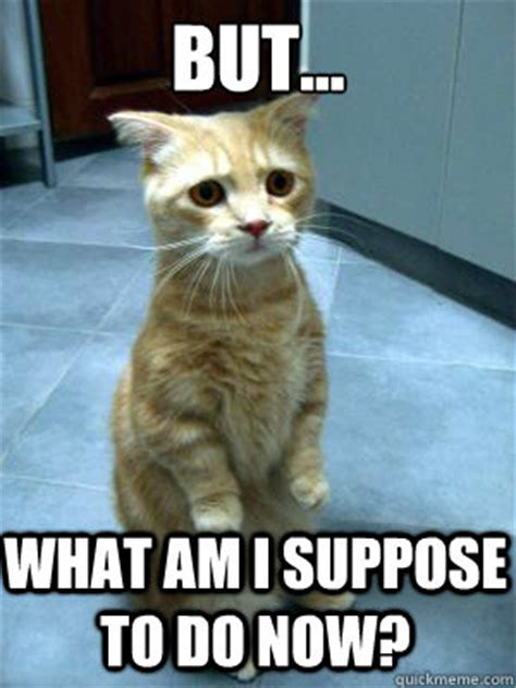 Sad Cat Meme - image gallery kitten sad face meme