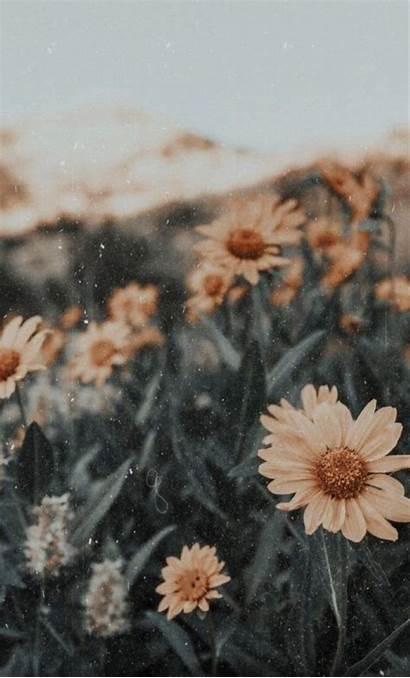 Pleasing Aesthetically Pastel Iphone Aesthetic Flower