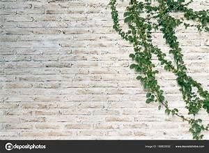 Plantes Grimpantes Mur : mur est brique puis peinte blanc les plantes grimpantes ~ Melissatoandfro.com Idées de Décoration