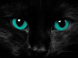 Black Cat, blue eyes - Pixdaus