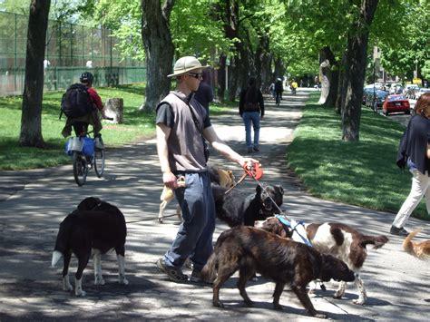 dog walker salary     careers  animals
