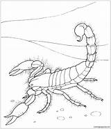 Desert Scorpion Pages Giant Coloring sketch template