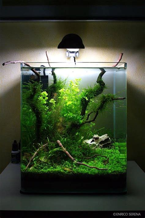 aquascapers  portrait planted aquariums aquarium