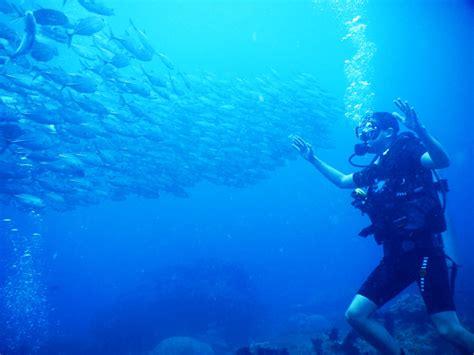 Raja At Dive - diving in raja at panning out