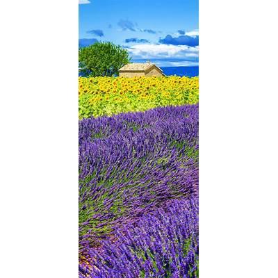 Best 25  Sunflower fields ideas on Pinterest