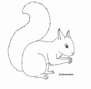 How to draw squirrel outline