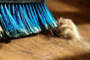 Bacteria in house dust reflect who lives there › News in ...