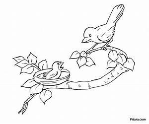 Mother & baby bird – Coloring page | Pitara Kids Network