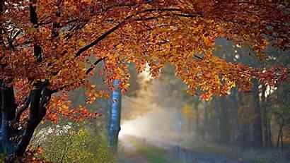 Autumn Rain Fall Road Wallpapers Tree Nature
