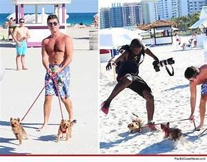 Simon Cowell Warns Paparazzi -- My Dogs Will F U Up! | TMZ.com