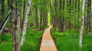 Jesup Path in Acadia National Park, Maine (© Pat & Chuck ...