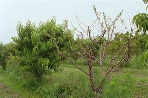 Plant Doctor / Fruit Trees