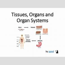Cells, Tissues, Organs And Organ Systems Presentation By Pand  Teaching Resources Tes