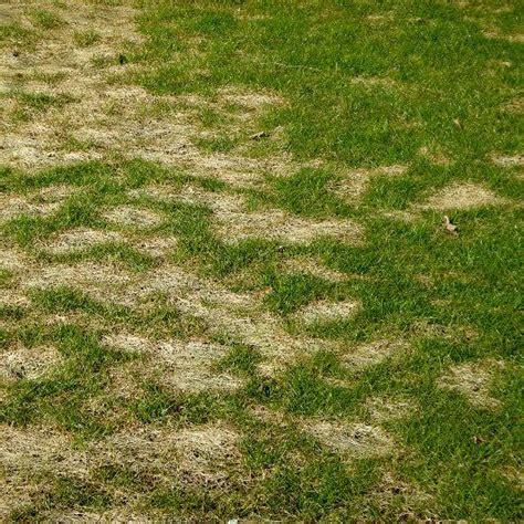 Pilze Im Rasen Schneiden by 17 Best Ideas About Rasenkrankheiten On