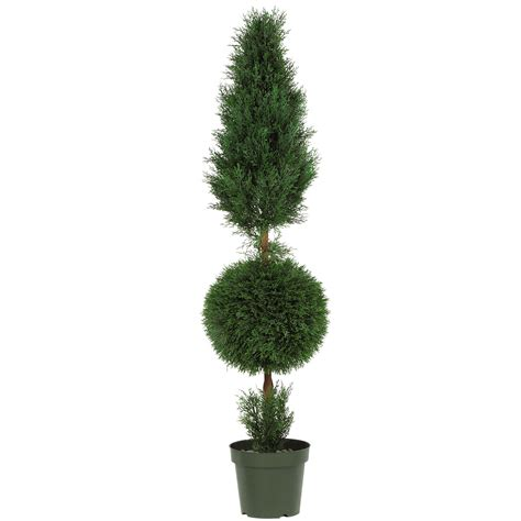 5 foot Outdoor Cypress Ball and Cone Topiary: Potted   5168